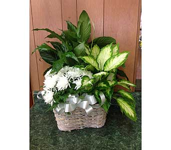 Plant Basket in Dorchester MA, Lopez The Florist