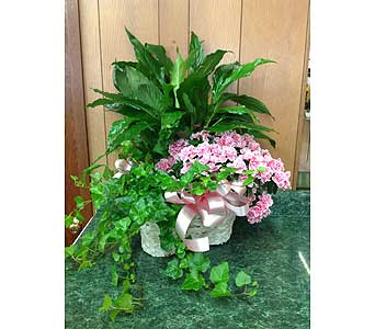 Indoor Garden Basket in Dorchester MA, Lopez The Florist