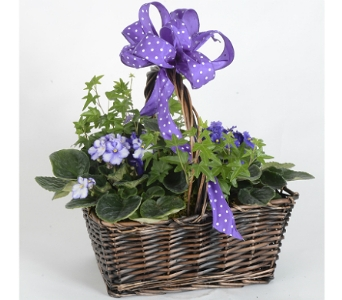 Violets in Bloom in Silver Spring MD, Bell Flowers, Inc