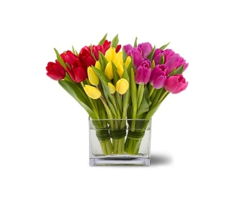 Tulips Together in Bradenton FL, Ms. Scarlett's Flowers & Gifts