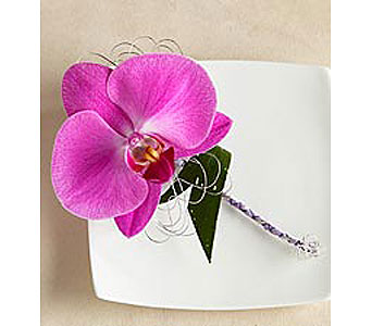 Purple Phaelenopsis Orchid Boutonniere in Stamford CT, Stamford Florist
