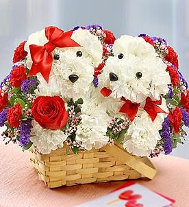 PUPPY LOVE  in Vienna VA, Vienna Florist & Gifts