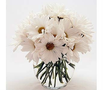 Simple White Daisies in Princeton, Plainsboro, & Trenton NJ, Monday Morning Flower and Balloon Co.