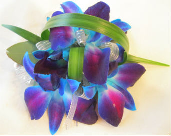 Purple / Turquoise Orchid in Farmington CT, Haworth's Flowers & Gifts, LLC.