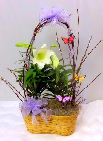 Easter Lily: Dressed in Scranton PA, McCarthy Flower Shop<br>of Scranton