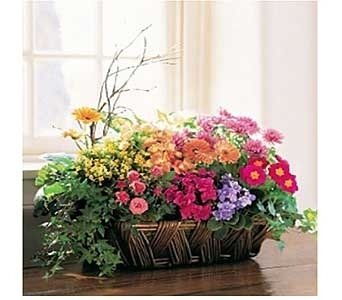 Deluxe European Garden Basket in San Antonio TX, Allen's Flowers & Gifts