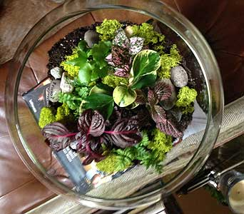 Bubble Bowl Terrarium in Bellevue WA, CITY FLOWERS, INC.