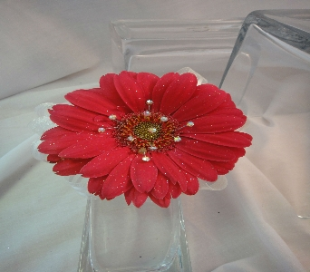 Gerbera Daisy in Greenville SC, Expressions Unlimited