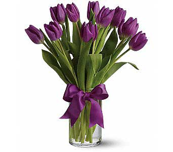 Purple Tulips in Rochester MN, Sargents Floral & Gift