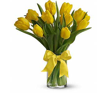Yellow Tulips in Rochester MN, Sargents Floral & Gift