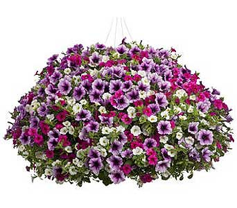 Hanging Basket 10 in Owego NY, Ye Old Country Florist