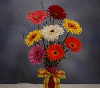 Daisy Fun in Cape Girardeau MO, Arrangements By Joyce