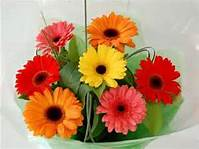 Wrapped Gerbera Daisies in Corunna ON, LaPier's Flowers