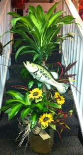 Fishing Adventures Corn Plant in Lake Charles LA, A Daisy A Day Flowers & Gifts, Inc.