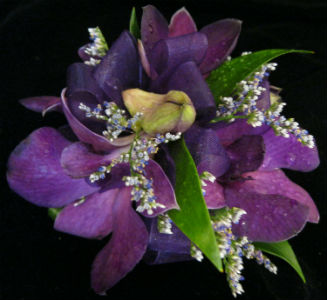 Purple Orchid in Farmington CT, Haworth's Flowers & Gifts, LLC.