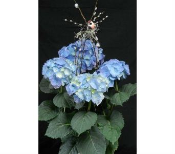 Blue Sky Hydrangea in Albuquerque NM, Silver Springs Floral & Gift