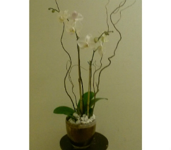Elegant White Orchids in Atlanta GA, Eneni's Garden, Ltd.