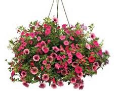 Hanging Baskets in Ogden UT, Cedar Village Floral & Gift Inc
