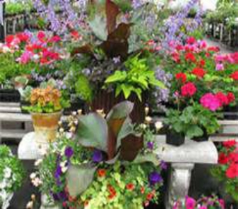 patio plants in Bismarck ND, Dutch Mill Florist, Inc.