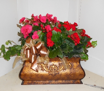 Double Begonia in Metal Container in Nashville TN, Emma's Flowers & Gifts, Inc.
