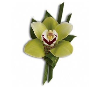Green Orchid Boutonniere in Fairfield CT, Hansen's Flower Shop and Greenhouse