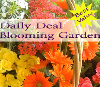 Blooming Garden Daily Deal in Norristown PA, Plaza Flowers