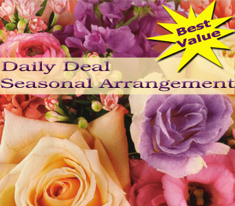 Seasonal Arrangement Daily Deal in Norristown PA, Plaza Flowers