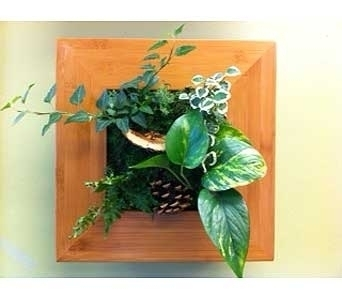 Wallflower Living Frame in Airdrie AB, Summerhill Florist Ltd
