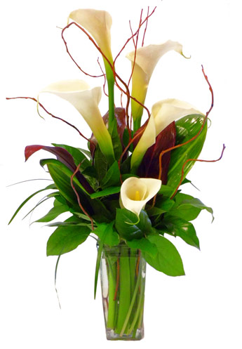 Callas Calling in Scranton PA, McCarthy Flower Shop<br>of Scranton