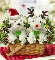 Christmas Paws in Guelph ON, Patti's Flower Boutique
