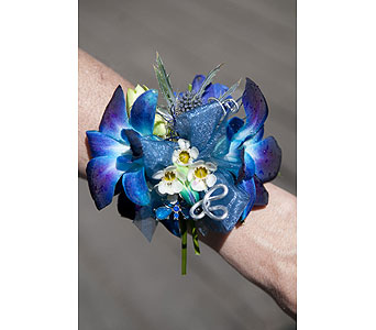 Blue Orchid in San Antonio TX, Blooming Creations Florist