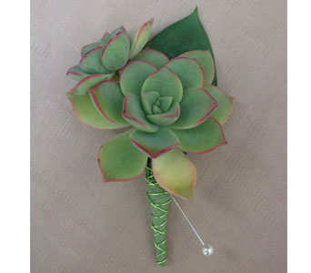 Succulent Boutonniere in West Los Angeles CA, Westwood Flower Garden