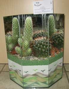 Large Cactus Garden in Guelph ON, Patti's Flower Boutique