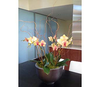 Garnet Orchid Bowl in Bellevue WA, CITY FLOWERS, INC.