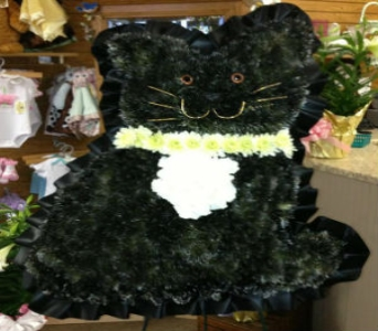 Solid Cat in Frankfort IL, The Flower Cottage