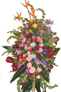 Color Popping Tropics Spray in Lake Charles LA, A Daisy A Day Flowers & Gifts, Inc.