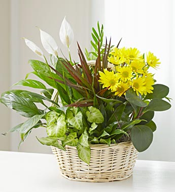DISH GARDEN WITH FRESH FLOWERS in Vienna VA, Vienna Florist & Gifts