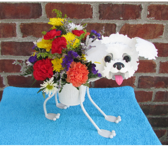 MINIATURE BICHON FRISE-for local delivery onl in Circleville OH, Wagner's Flowers