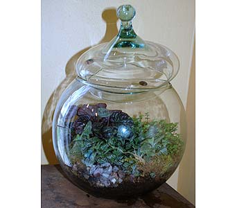 Round Terrarium in Hales Corners WI, Barb's Green House Florist