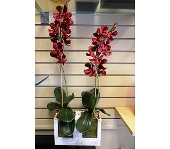 Faux Orchid Duo in Tampa FL, Buds Blooms & Beyond
