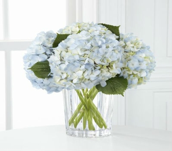 True Blue Hydrangea in Manhattan KS, Westloop Floral