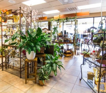 Shop in Tampa FL, Buds Blooms & Beyond