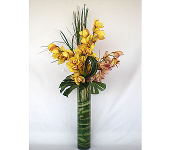 Zen Cymbidium Orchids in Los Angeles CA, Dave's Flowers