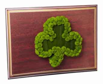Welch's Shamrock For Sympathy-1 in Lynn MA, Welch Florist