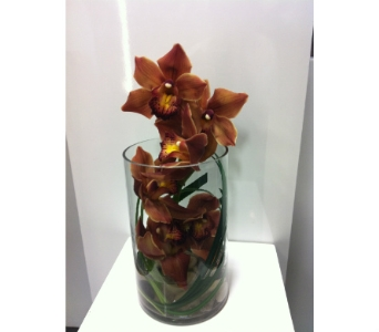 Cymbids in View in Thornhill ON, Orchid Florist