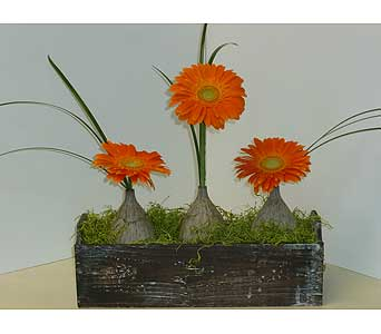 Fall for Gerbs in Moorestown NJ, Moorestown Flower Shoppe