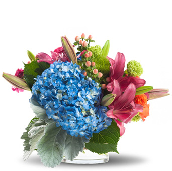 Hydrangea Elegance in Oklahoma City OK, Capitol Hill Florist & Gifts