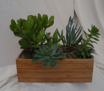 Savvy Succulent Garden in Evanston IL, West End Florist & Garden Center Inc.