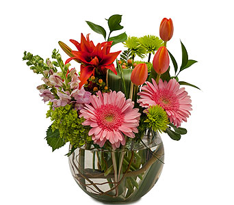 Splendor Surprise in send WA, Flowers To Go, Inc.