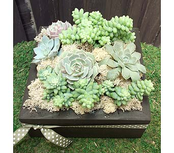 Succulent Plant Square in West Los Angeles CA, Westwood Flower Garden